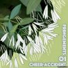 Cheer-Accident - Fringements One (2020) [FLAC (tracks + .cue)]